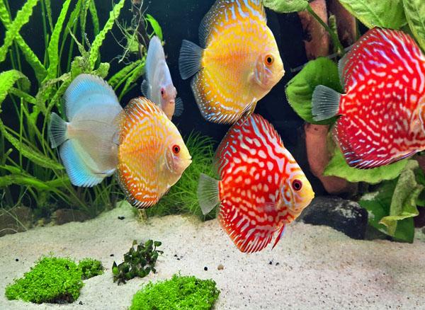 Fische1